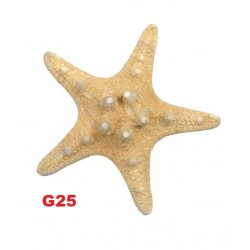 Estrela mar 4-6cm